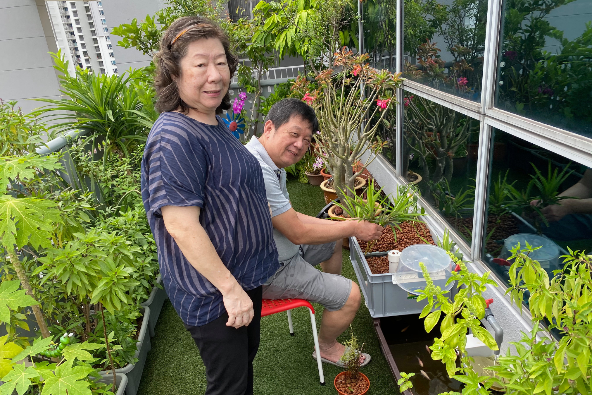 Silver Entrepreneur Interview with Edwin and Uncle Chia Aquaponics